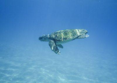 želvy zakynthos